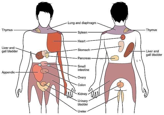 Referred_Pain_Chart